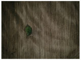 Самотното Дърво ; comments:7