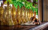 Коте - Буда ; Comments:1