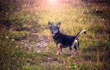 А понякога (ако си късметлия), в живота ти влиза едно Куче и променя всичко. ; comments:3