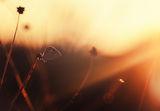 Слънчево докосване ; comments:10