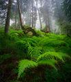 Безкрайни горски истории ; comments:23