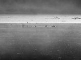 Утро на сребърното езеро... ; comments:1