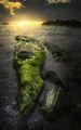 Морско зелено килимче ; comments:11
