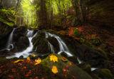 Есенни моменти ; comments:28