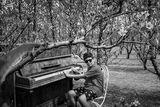 Концерт в гората ; Comments:1
