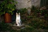 Коте ; comments:5