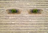 очите на земята ; comments:12
