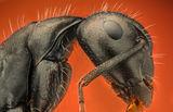 Мравка ; comments:10