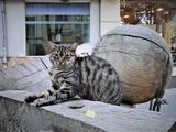 Котка и топка ; comments:1