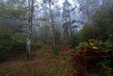 Мъглива есен ; comments:5