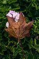 Прегърни ме преди есенния вятър ; No comments