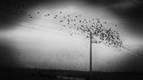 есенни птици ; comments:26