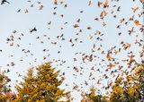 Падащите есенни листа ,всъщност не са листа ; comments:4