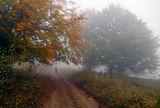 Есенна разходка ; comments:5