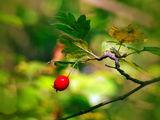 Есенно... :) ; comments:9