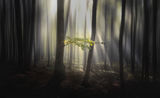 Есен в гората ; comments:3