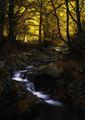 Път към Есента... ; comments:8