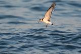Малка чайка ; comments:4