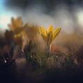 Градината преди рая... ; comments:29