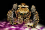 Ти! Обичаш ли паяци? ; comments:26