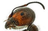 Мравка ; comments:7