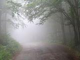 Омагьосаната гора ; comments:1