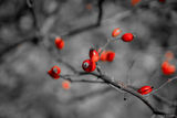 B&W and RED COLOR ; comments:3