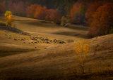 Играят си есента и светлината ..... и ронят се лист подир лист..... ; comments:17