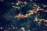 Есен ; Comments:5