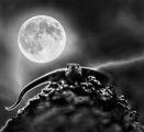 Нощна стража ; comments:28