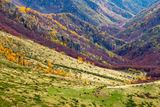 Есенни рими от Стара планина ; Comments:6