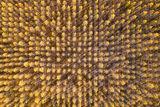 Есенна текстура ; comments:24
