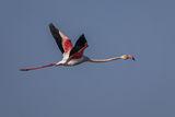 Розово фламинго... ; comments:5