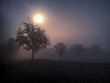 из мъглата... ; Comments:9