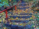 Есенната стълба ; comments:11