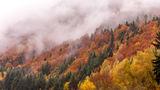 Есенни цветове ; Comments:7