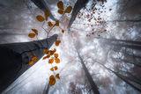 Есен в гората ; comments:30