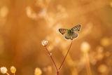 Всяка пеперуда е различна ; comments:33