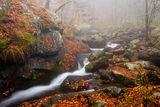 В мъгливата прегръдка на есента ; comments:10