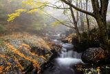В мъгливата прегръдка на есента ; comments:11