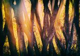 Есенна импресия ; comments:11