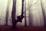 Чудовището от вълшебната гора ; comments:17