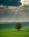 Зелена самота.... ; comments:8