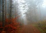 Мъглива есен ; Comments:12