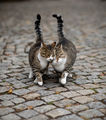 Cat walk ; comments:14