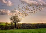 Краят на есента ; comments:23