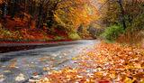 Есенни листа ; comments:13