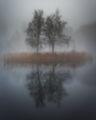 Mъглива есен ; comments:25