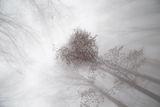 Сърцето на гората... ; comments:20