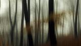 Мъгливо горско ; comments:3